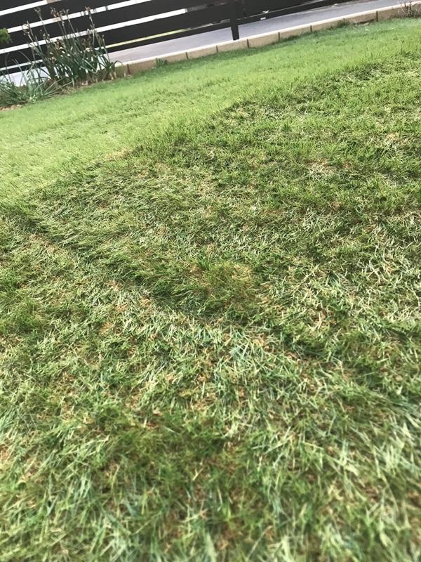 リアル人工芝 枯れ草色の混ざり状態