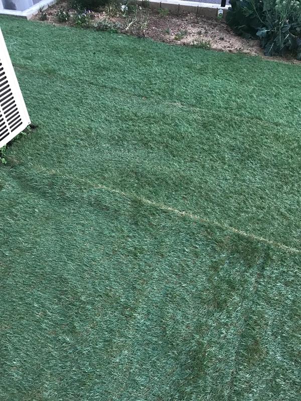 ロウヤのリアル人工芝